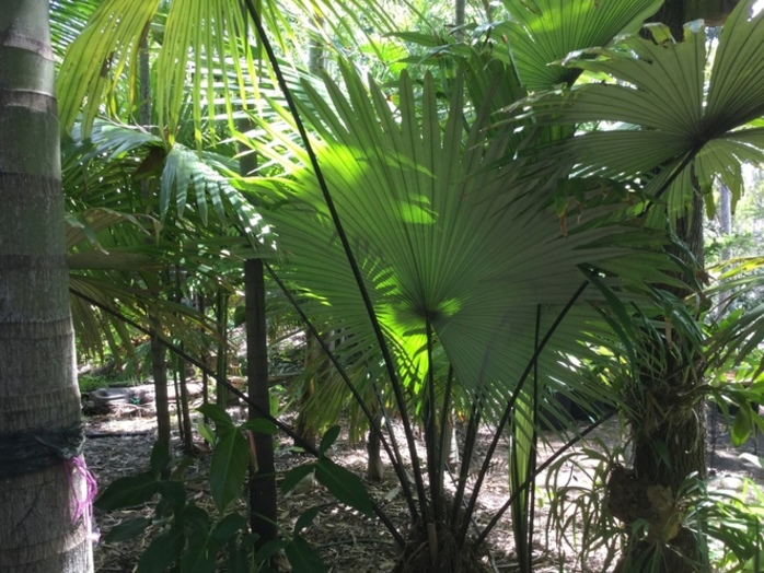 National Palm and Cycad Show and Sale 2018